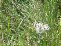 d fluture 6744