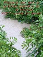v ploaia 8537